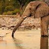 Elephant & stork