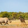 Cantankerous rhino 3
