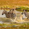 Zebra alarm 1