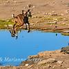 Kudu high jump 5