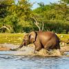 Elephants at Klein Namutoni 2