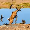 Kudu high jump 1