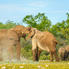 Elephants at Klein Namutoni 3