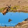 Kudu high jump 3