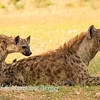 Hyena mother & cub