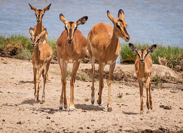 Family of impala