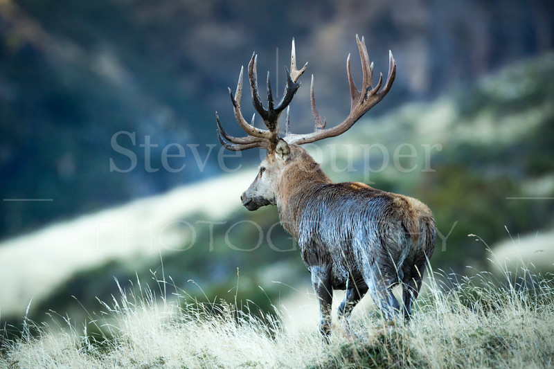 Red Stag Wallow