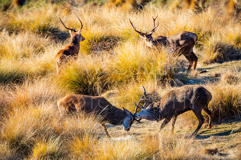 Stags Sparring