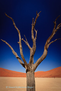 A close up of  a dead tree which seems to be clawing at the burning sky in the famous Deadvlei,  in Sossiusvlei, Namibia,