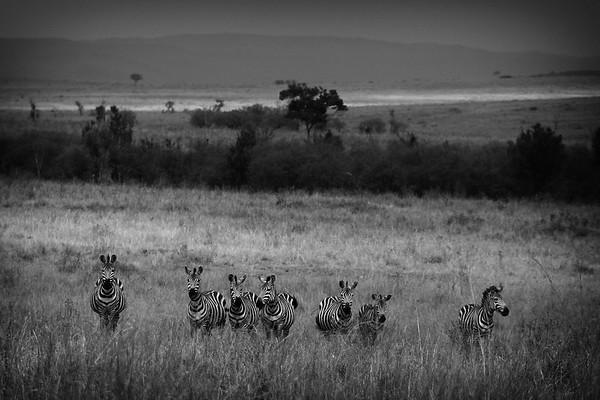 Wildlife Photography from Masai Mara, Kenya