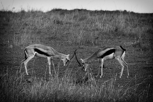 Wildlife Photography from Masai Mara, Kenya