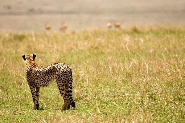 Masai Mara Wildlife Game Park, Kenya