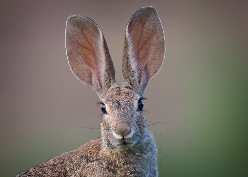Bunny-sharpen-sharpen-L.jpg