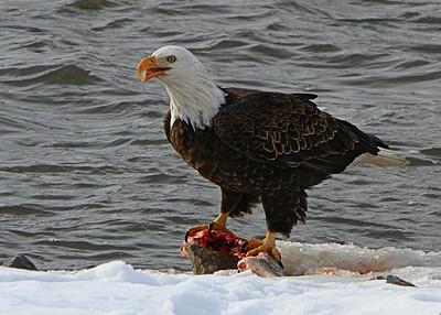 havana_eagle_watch-4948_crp