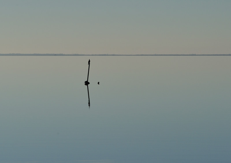 Neotropic Cormorant on East Bay