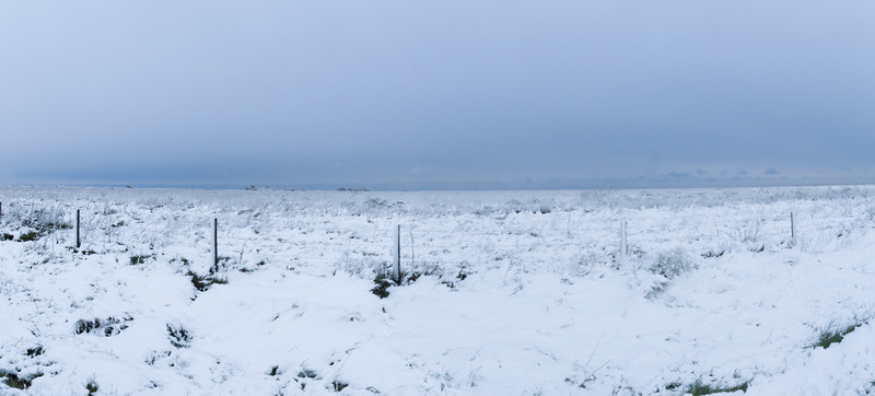 Snow-covered Field