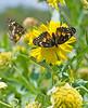 Border Patch Butterflies