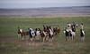Paint Wild Horses