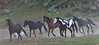 These horses were running out of the hills to the feed troughs.