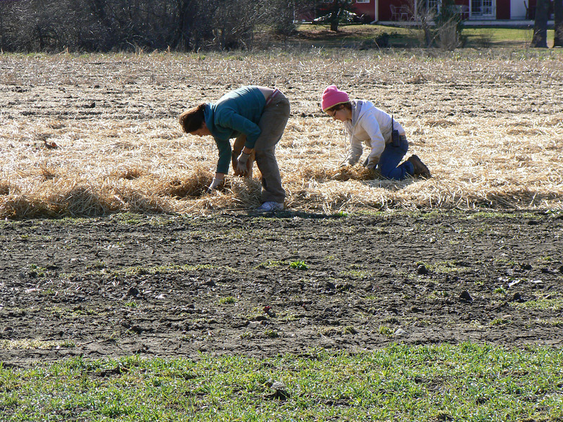 Busy, busy! A new team of apprentices worked the fields all spring getting ready for an even busier summer.