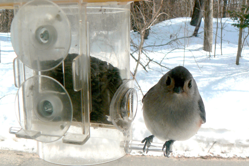 "Thanks to the window bird feeder we were able to watch the birds from inside! Nice way to ""bird-watch"" on a freezing cold day."