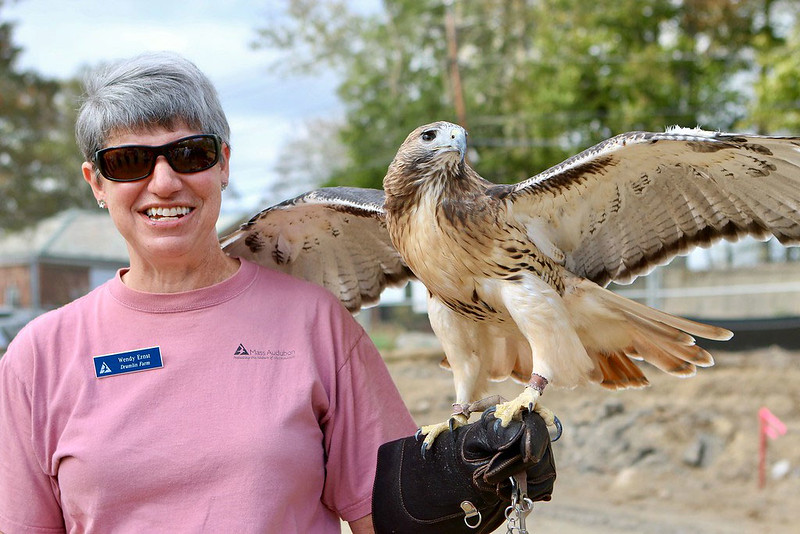 Drumlin ELC - Teacher Naturalist & Red-Tailed Hawk