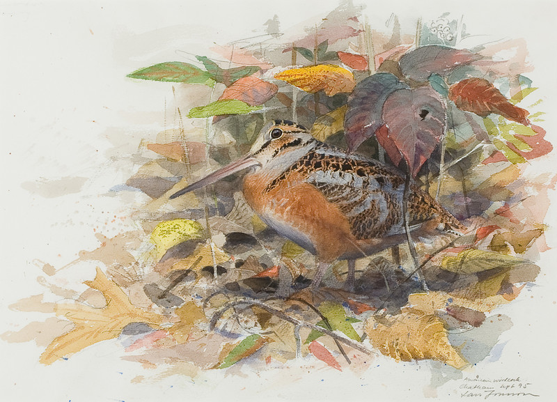 "From the <a href=""http://www.massaudubon.org/Nature_Connection/Sanctuaries/Visual_Arts/index.php"">Mass Audubon Art Collection</a>: Lars Jonsson, <em>American Woodcock, 1995"