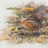 "From the <a href=""http://www.massaudubon.org/Nature_Connection/Sanctuaries/Visual_Arts/index.php"">Mass Audubon Art Collection</a>: Lars Jonsson, <em>American Woodcock, 1995"
