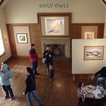 ONLY OWLS exhibition was packed with plenty of activities for young and old.