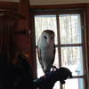 The barn owl - so regal looking and mysterious too!