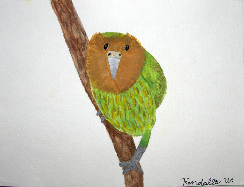 The Kakapo Bird