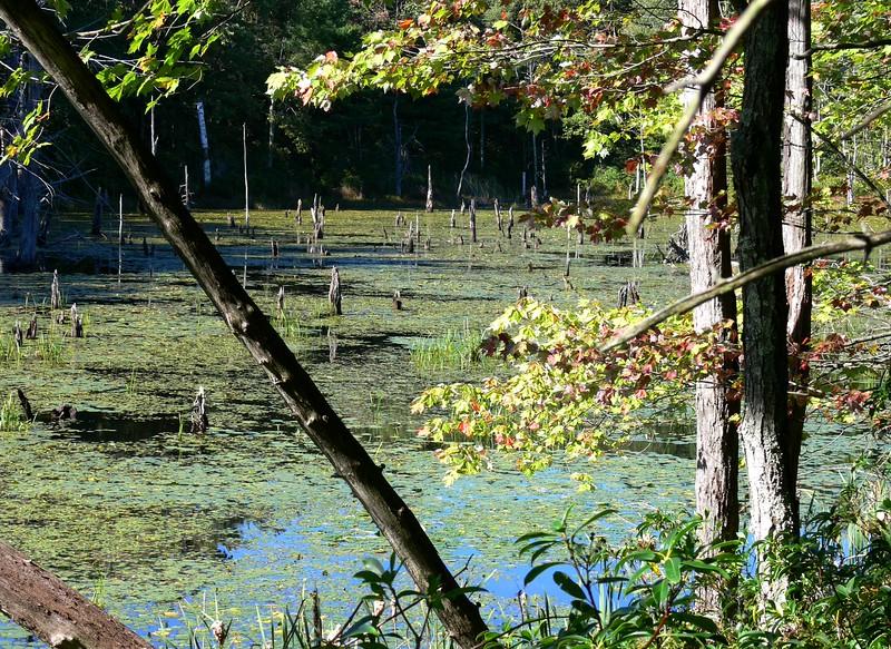 Burncoat Pond in Spencer
