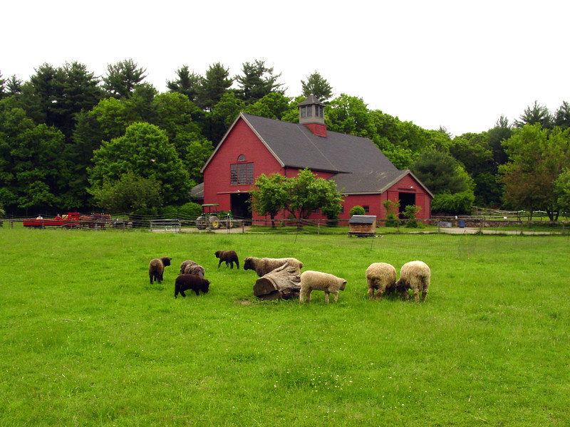 Drumlin Farm in Lincoln