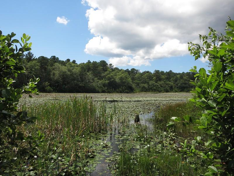 Skunknett River in Barnstable
