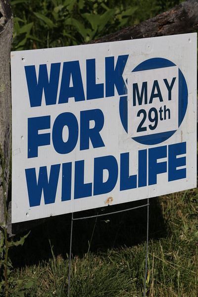 Mass Audubon South Shore Sanctuaries held our 30th annual Walk for Wildlife at 4 PM on Friday, May 29, 2015 at Daniel Webster Wildlife Sanctuary.