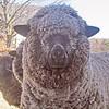 """""""Wool Blind"""""""