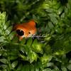 Orange Tree Frog