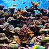 The Birch Aquarium, La Jolla, California