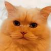 A freckled nose