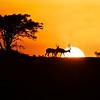 Two Impala silhouetted crossing the setting sun, Maasai Mara, Kenya
