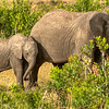 Elephant and calf, Maasai Mara, Kenya