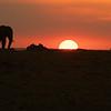 Elephants at sunset, Maasai Mara, Kenya