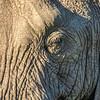 Elephant eye, Maasai Mara, Kenya