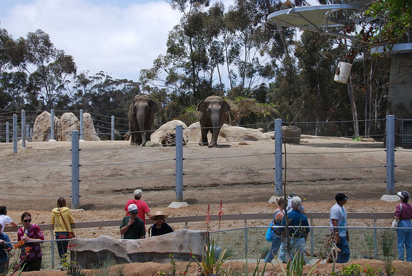This is just one part of the new elephant area.