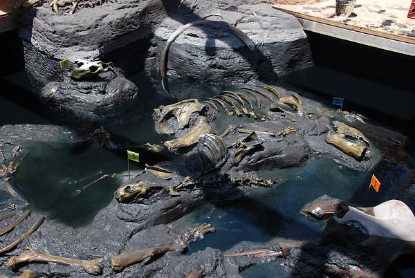"This is a ""tar pit"" exhibit, describing fossils, etc."