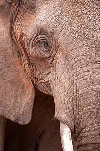 Elephant portrait, Tarangire NP
