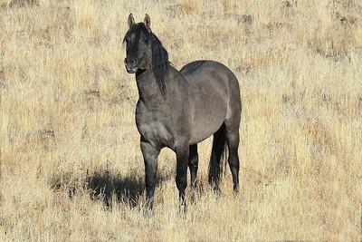 Gorgeous younger Stallion.