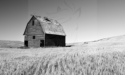 Barn and wheat.