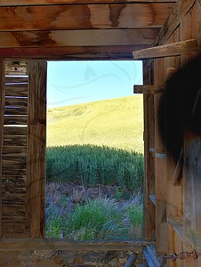 Looking out the barn door.