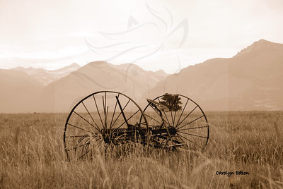 Old hay rake.